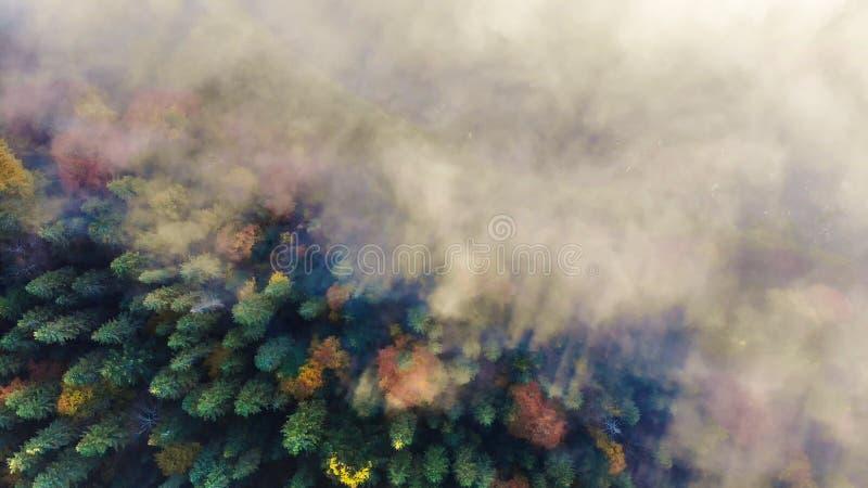 Vista aerea di paesaggio di stupore delle foreste carpatiche La nebbia di mattina si diffonde il fiume ed avvolge le montagne fotografia stock