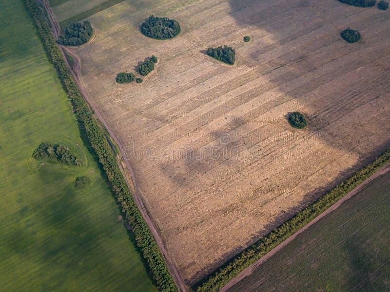 Vista aerea di un campo agricolo verde e dei prati con erba e le piante separate da una strada campestre nel mezzo ed in una stri fotografia stock libera da diritti