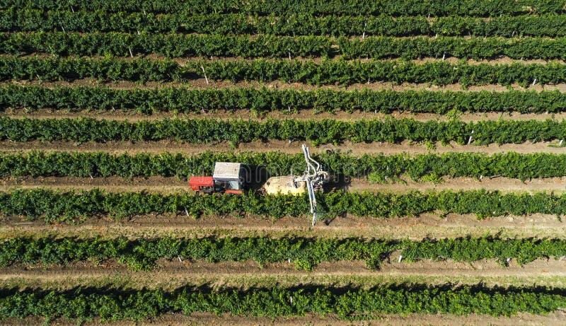 Vista aerea di un trattore che raccoglie l'uva in una vigna Viti di spruzzatura dell'agricoltore con il trattore fotografia stock
