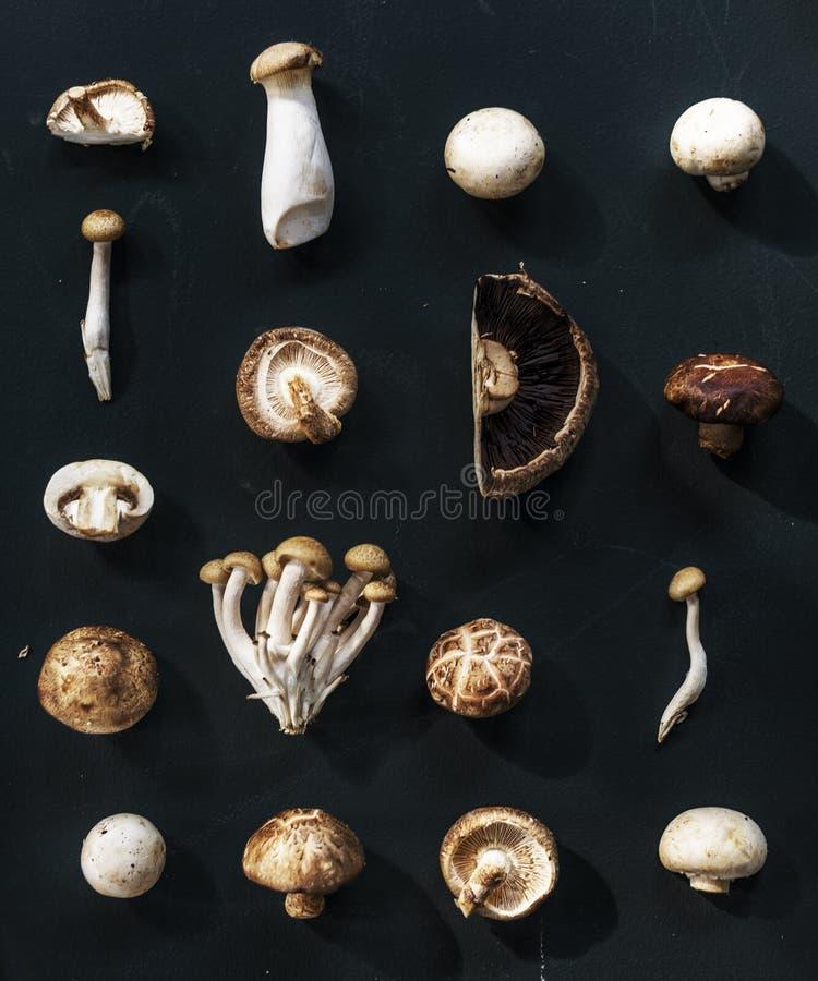 Vista aerea di varia raccolta del fungo di fondo nero fotografia stock