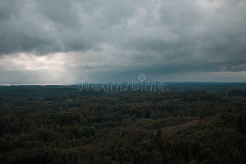 Vista aerea sopra la foresta verde nella sera Mistero nuvoloso Paesaggi della Lettonia fotografie stock libere da diritti