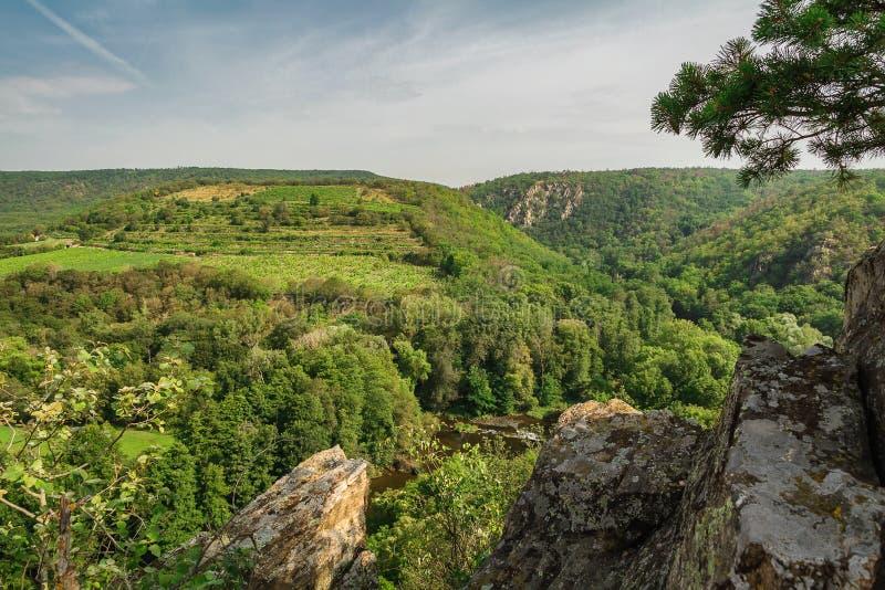 Vista agradável ao vale com rio Dyje, rocha e árvore, parque nacional Podyji, república checa fotografia de stock