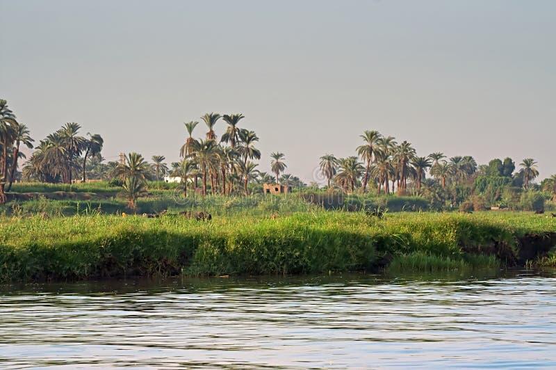 Vista agradável do Nilo do banco de rio em Egito fotos de stock royalty free