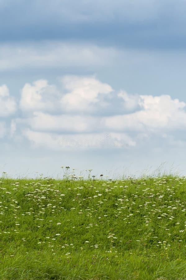 Vista agradable de la hierba verde, de flores y de un cielo nublado imagen de archivo