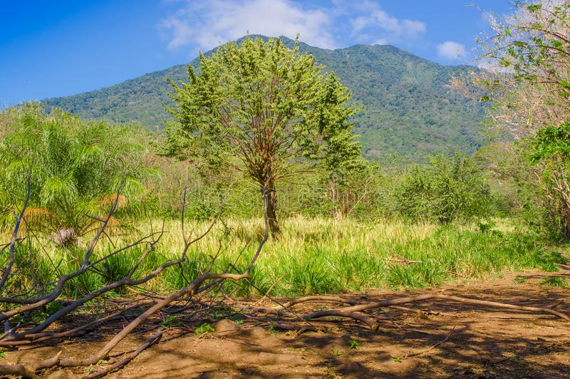 Vista al aire libre de la vegetación, árboles en Volcano Concepcion en la isla de Ometepe en Nicaragua fotos de archivo