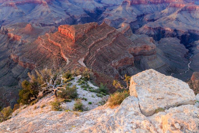 Vista al Gran Cañón Correa de roca, árbol muerto, formación de roca triangular fotos de archivo libres de regalías