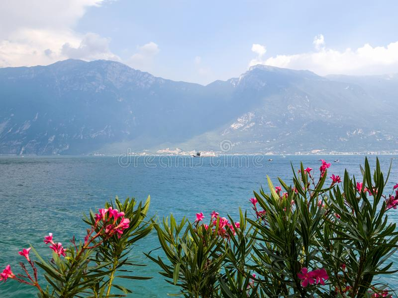 Vista al lago Garda con las flores de un arbusto del adelfa del Nerium en el primero plano y de un transbordador en el fondo fotografía de archivo libre de regalías