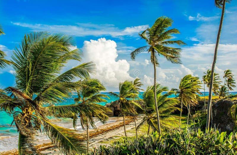 Vista al mar de Barbados de la costa este fotos de archivo