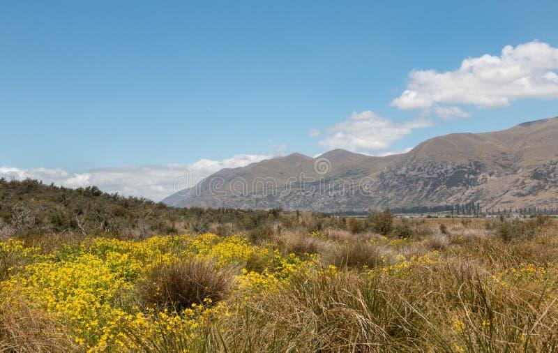 Vista al Mt Buccia dalla riva del fiume di Rangitata fotografie stock libere da diritti