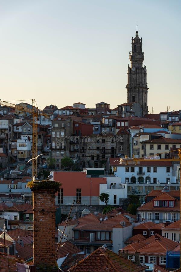 Vista alla città della torre di Clerigos e di Oporto Gabbiani nella priorità alta fotografia stock libera da diritti