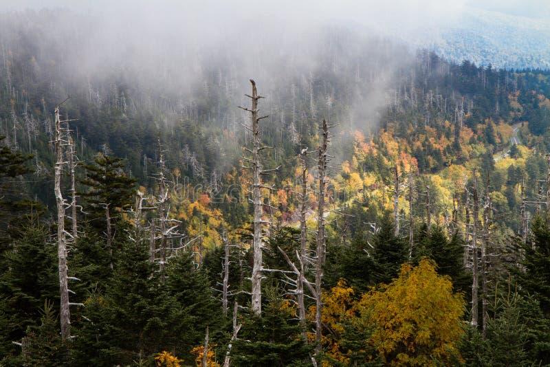 Vista alla cupola di Clingmans di Great Smoky Mountains NP immagini stock