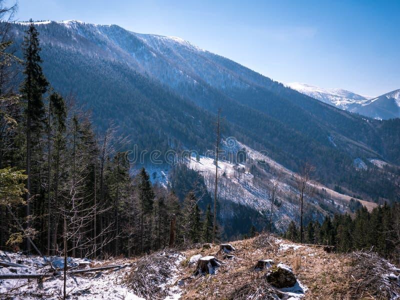 Vista alle montagne di inverno con gli alberi verdi fotografia stock libera da diritti