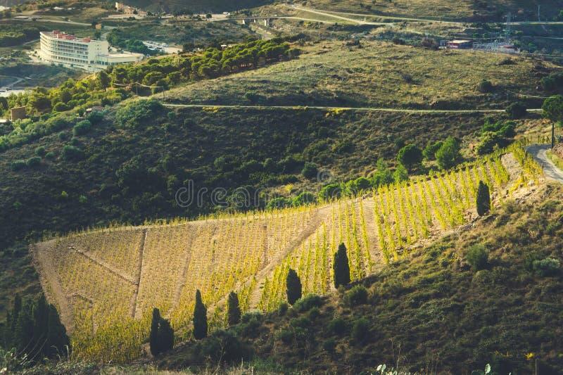 Vista alle vigne della costa del vermiglio, Catalogna, Francia fotografia stock libera da diritti