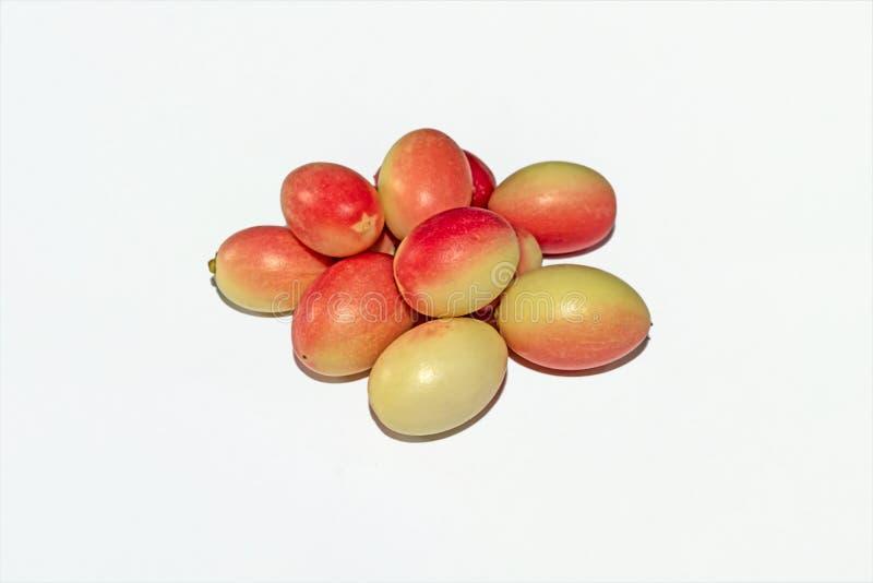 Vista alta vicina delle carand? del Carissa o della frutta indiane fresche ed organiche di karanda su fondo isolato bianco immagini stock libere da diritti