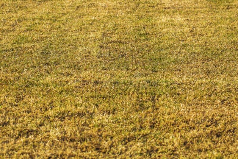 Vista alta vicina di giovane campo di erba nel giorno di molla sunnny Bei ambiti di provenienza di struttura della natura fotografia stock libera da diritti
