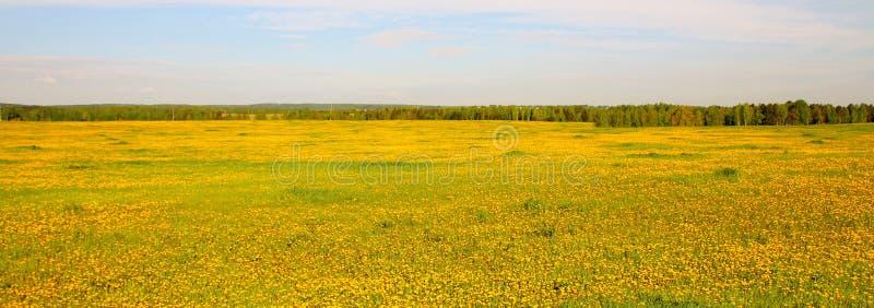 Vista amplia del campo floreciente amarillo fotografía de archivo libre de regalías