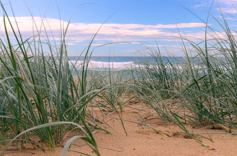 Vista ao oceano através da grama da duna na praia shelly na costa da central de Novo Gales do Sul imagens de stock