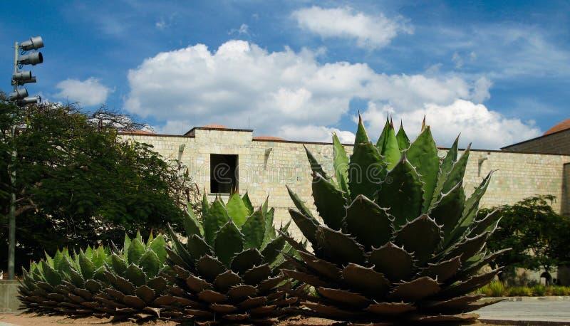 Vista ao quadrado da catedral de Oaxaca com planta da agave, México foto de stock