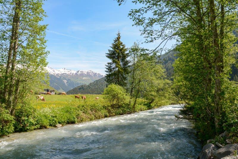 Vista ao vale de Tuxertal com rio de Tux e cumes de Zillertal perto da vila Juns e à geleira no verão, Tirol Áustria Europa de Hi foto de stock