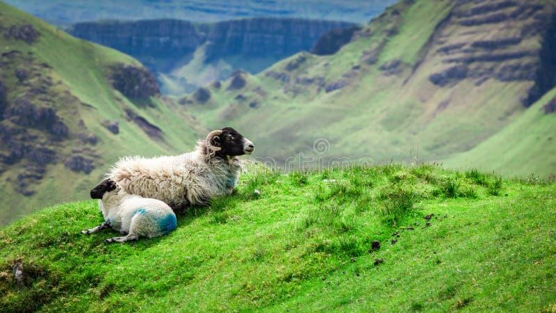 Vista aos carneiros em Quiraing, ilha de Skye, Escócia imagem de stock