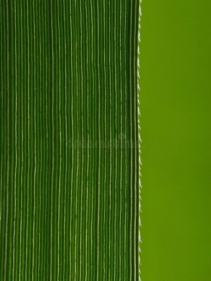 Vista aproximada de uma folha verde fotografia de stock