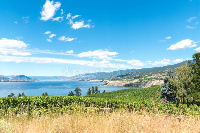 Vista arrebatadora de viñedos, lago, montañas, cielo azul en verano imágenes de archivo libres de regalías