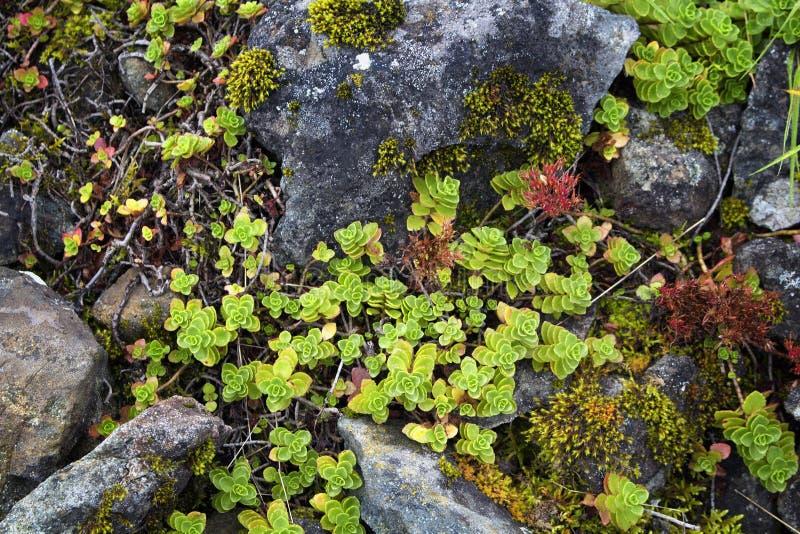 Vista ascendente cercana de las rocas de la montaña y de las plantas silvestres foto de archivo libre de regalías