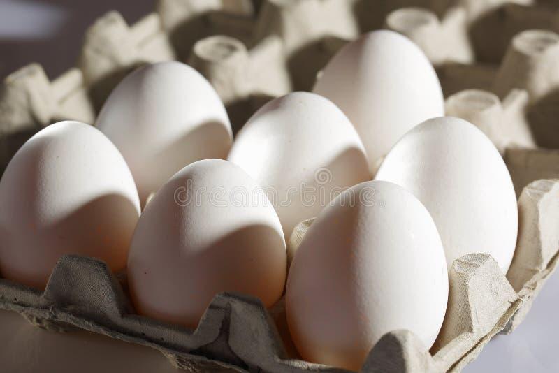 Vista ascendente cercana de los huevos blancos del pollo en la célula de huevo aislada Fondos de la comida Concepto sano de la co imagen de archivo