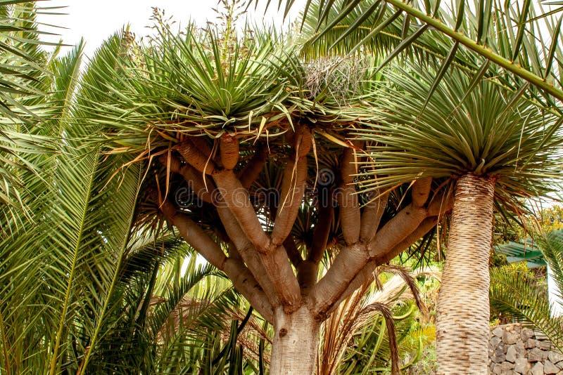 Vista ascendente próxima sobre o jardim botânico com palmas fotografia de stock royalty free