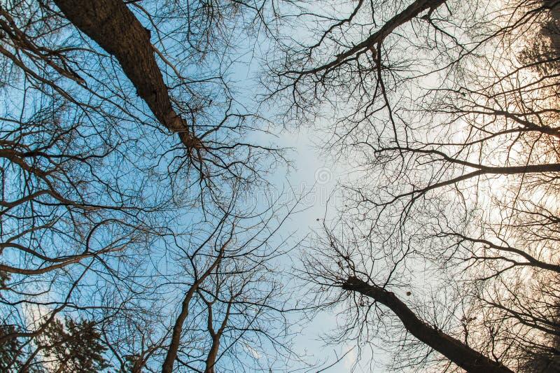 Vista astratta ed artistica di arte, del fisheye Ramo di albero e della foresta immagini stock