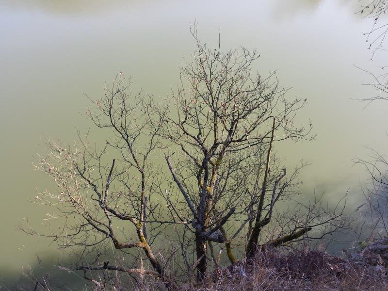 Vista através da árvore na água imagem de stock