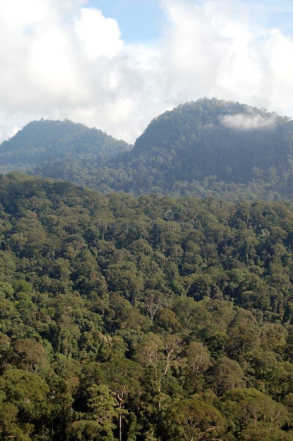 Vista através da floresta úmida densa de Bornéu foto de stock