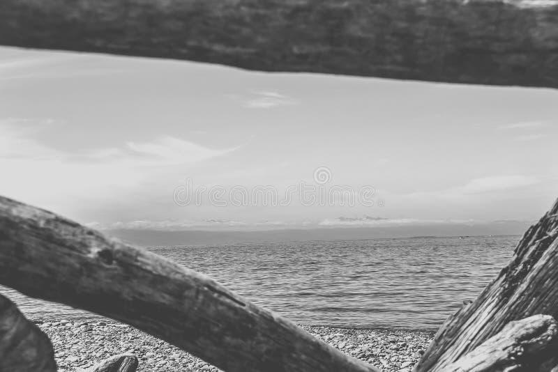 Vista através da madeira lançada à costa fotos de stock