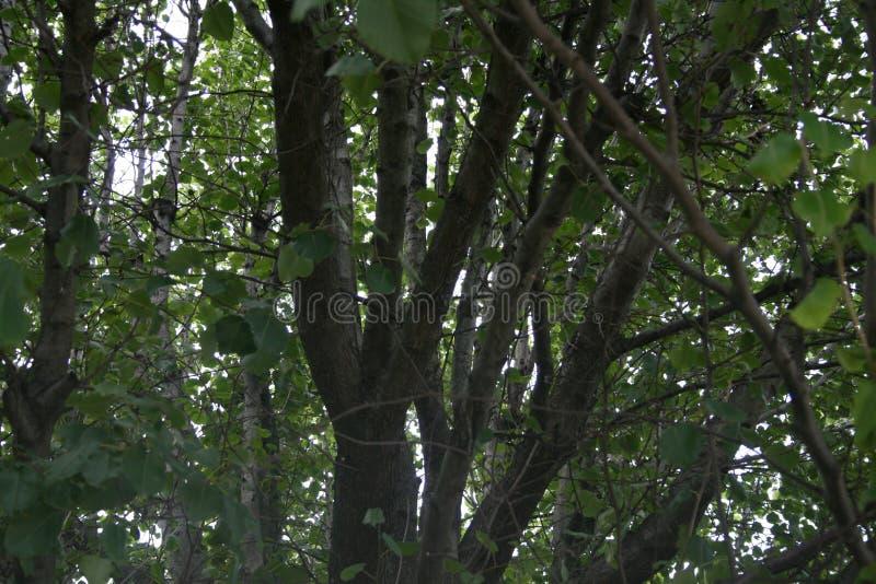 Vista através das árvores foto de stock royalty free