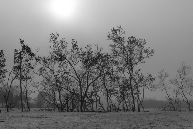 Vista através das árvores em um dia nevoento foto de stock royalty free