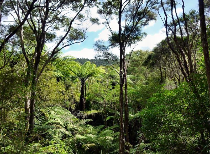 Vista através das copas de árvore do bushland nativo fotos de stock royalty free