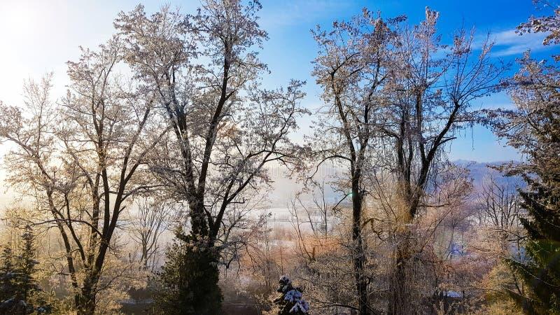 Vista através de minha janela em um nascer do sol frio da manhã do inverno com ramos de árvore congelados fotos de stock