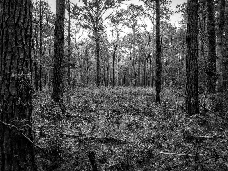 Vista attraverso la foresta fotografie stock libere da diritti