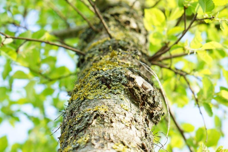 Vista bassa dell'albero fotografia stock libera da diritti