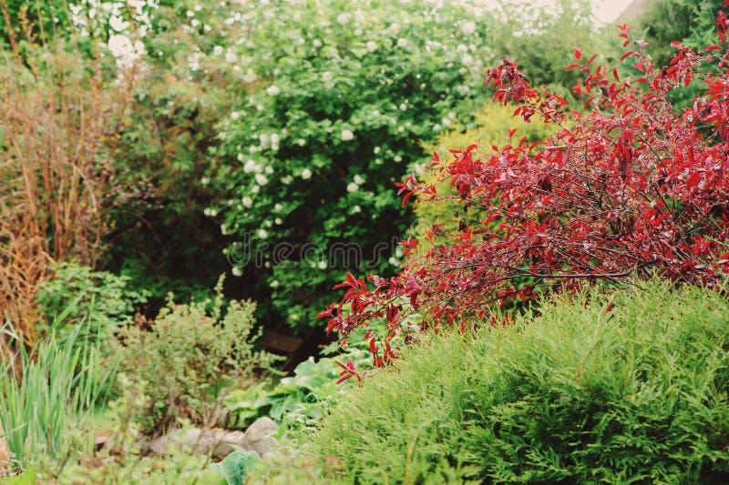 Vista bonita com árvores e os arbustos coloridos Jardim inglês na mola imagem de stock