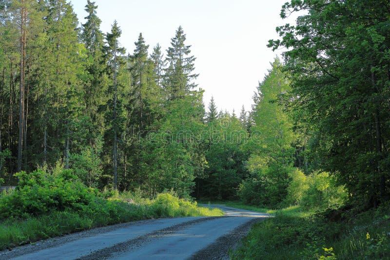 A vista bonita da estrada do cascalho no verde suculento da floresta coloriu árvores na luz - fundo do céu azul foto de stock royalty free