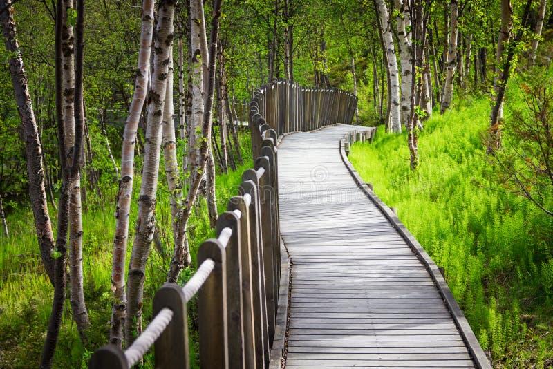 Vista bonita da floresta em Noruega do norte perto de Alta imagens de stock