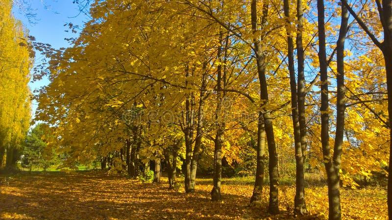 Vista bonita da floresta foto de stock royalty free