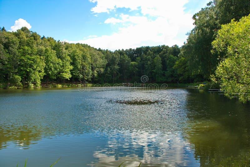 Vista bonita da lagoa, cercada pela folha densa de árvores verdes imagens de stock royalty free