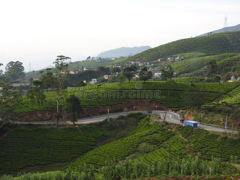 Vista bonita da plantação de chá da montanha alta em Sri Lanka, Nuwara Eliya fotos de stock royalty free