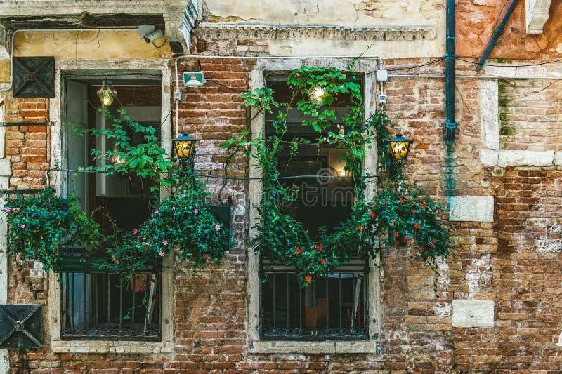 Vista bonita das janelas do café, decorada com as plantas verticalmente crescentes em Veneza no canal Parede de tijolo antiga Bon fotos de stock royalty free