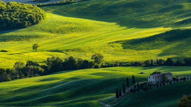 Vista bonita de campos e de prados verdes no por do sol em Toscânia foto de stock royalty free