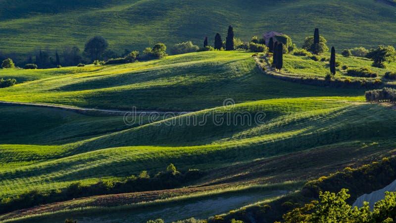 Vista bonita de campos e de prados verdes no por do sol em Toscânia fotos de stock royalty free