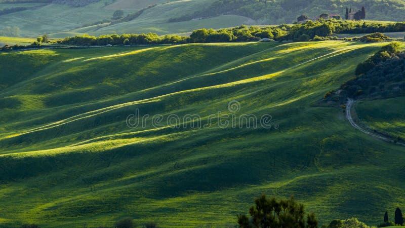 Vista bonita de campos e de prados verdes no por do sol em Toscânia foto de stock