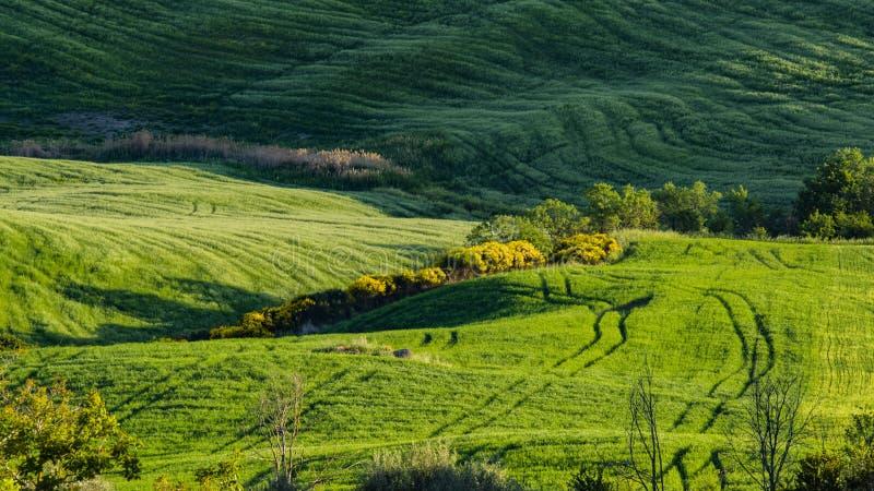 Vista bonita de campos e de prados verdes no por do sol em Toscânia fotos de stock